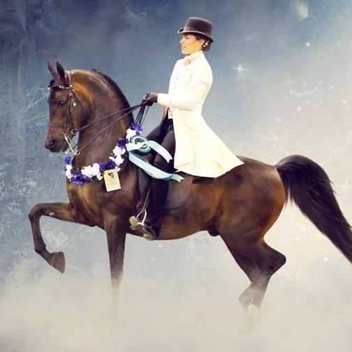 National Champion Arabian Wurlitzer by Triften