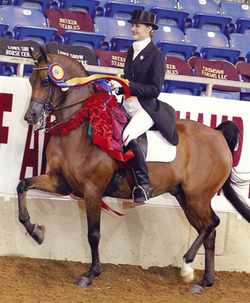 Winning Afire Arabian National Champion
