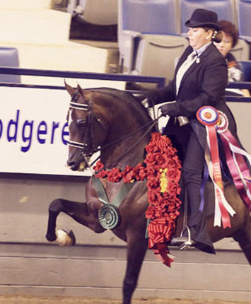 National Champion Arabian Expressamo by IXL Noble Express