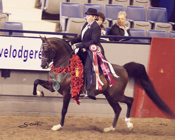 Jill Sherman and National Champion Arabian Expressamo