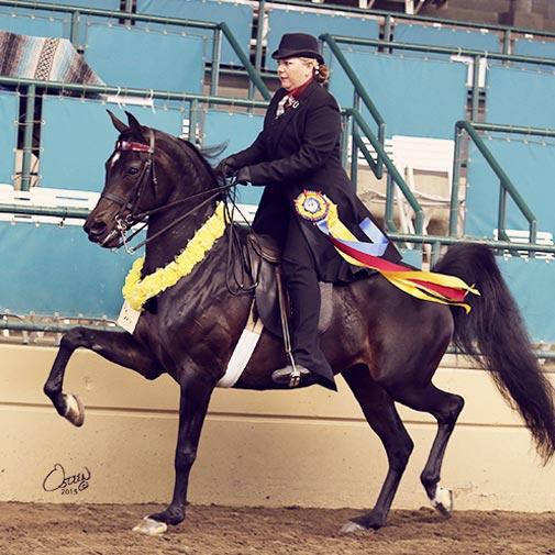 Arabian mare Pinapple Express by IXL Noble Express