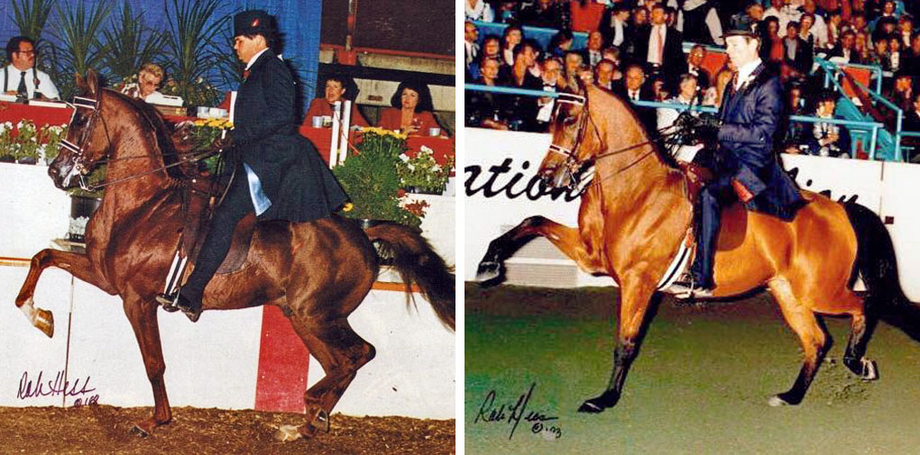 Turn My Way Arabian mare sired by MHR Nobility