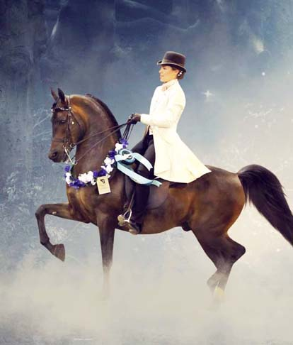 National Champion Arabian Wurlitzer by Triften