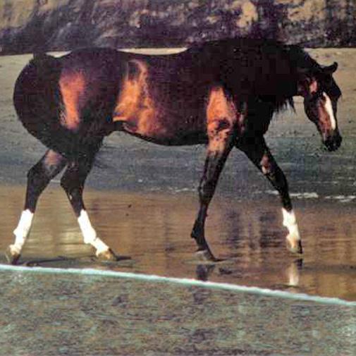 Spellbounde Arabian
