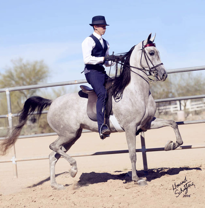 Sugarlishious Half-Arabian Country horse