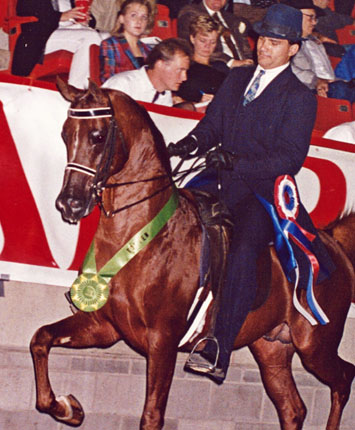 The Winning Guess Arabian stallion