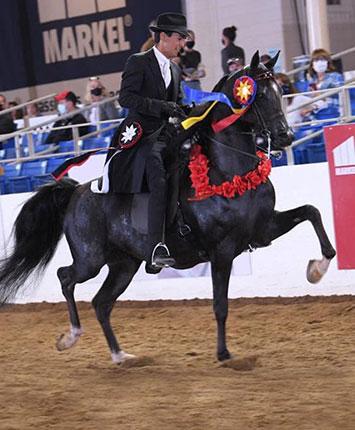 SR Lava - 2021 Scottsdale Unanimous Champion English Pleasure Junior Horse
